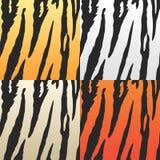 Pieles del tigre del vector Foto de archivo libre de regalías