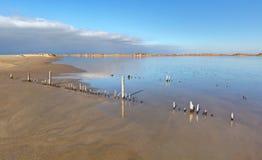 Piemanson wyrzucać na brzeg Camargue, Francja - - de - Fotografia Stock