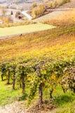 Italian Vineyard Stock Photo