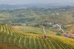 Piemonte winnicy, Langhe, Włochy Zdjęcia Royalty Free