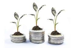 pieniądze drzewna moneta Zdjęcia Stock