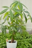 Pieniądze Drzewna roślina Outdoors zdjęcia royalty free