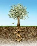 Pieniądze drzewo w glebowym przekroju poprzecznym pokazuje dolara amerykańskiego znaka zakorzenia Zdjęcia Royalty Free