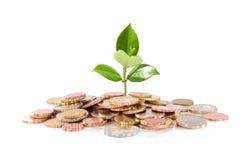 Pieniądze i roślina - finansowy nowy biznes Zdjęcia Royalty Free