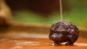 Pieniądze kumaka woda opuszcza dzień zdjęcie wideo