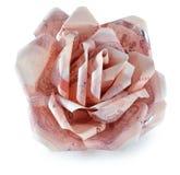 Pieniądze kwiat na białym tle Zdjęcia Stock