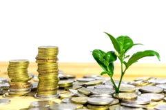 Pieniądze narastający pojęcie Obraz Stock