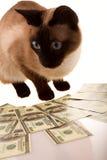 pieniądze oszczędzanie Zdjęcie Stock