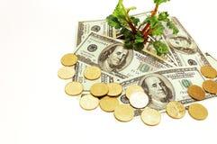 pieniądze roślina Fotografia Stock