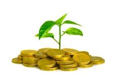 pieniądze roślina Obraz Royalty Free