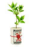 pieniądze rośliny rolka Fotografia Royalty Free