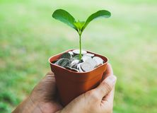 Pieniądze w garnku z rośliny dorośnięciem, oszczędzania pojęcie zdjęcia stock