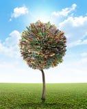 Pieniędzy Drzewni południe - afrykański skraj Obraz Royalty Free