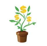 pieniądze drzewo Zdjęcie Stock