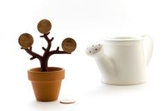 Pieniądze drzewo zdjęcie royalty free