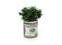 pieniądze drzewo Obraz Royalty Free