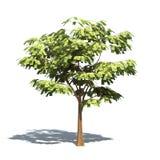 pieniądze drzewo Zdjęcia Royalty Free