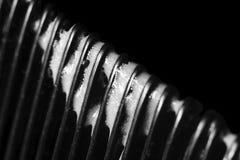 Pieni się na zębach grępla na czarnym tle Fotografia Stock