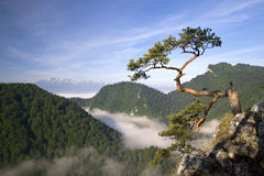 pieniny poland för maximum sokolica Royaltyfria Bilder