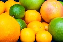 In pieno degli agrumi Arance, mandarini, calce, pomelo, pompelmi Fotografia Stock Libera da Diritti