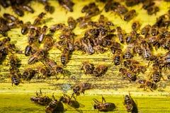 In pieno degli alveari del miele in campagna Immagini Stock Libere da Diritti