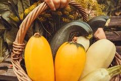 In pieno dei vegatables, dello zucchini e dei verdi freschi nel canestro del giardino di un agricoltore Tempo di raccolta Fotografia Stock
