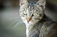 Piense los ojos de gato verdes Imágenes de archivo libres de regalías