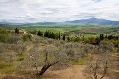 Pienza italy Tuscan landskap Royaltyfri Bild