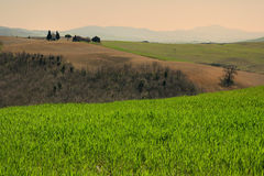 PIENZA, TOSCANE/ITALIE - 31 MARS 2017 : beau paysage de la Toscane, peu de chapelle de Madonna di Vitaleta, Pienza, Sienne Photos libres de droits