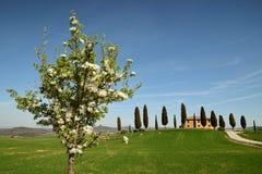 PIENZA, TOSKANA/ITALIEN - 31. MÄRZ 2017: Toskana-Landschaft, Ackerland I Cipressini, Bäume der italienischen Zypresse mit ländlic Lizenzfreies Stockbild