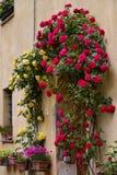 PIENZA, TUSCANY/ITALY - 18 DE MAIO: Rosas em torno da porta de um suporte Imagem de Stock
