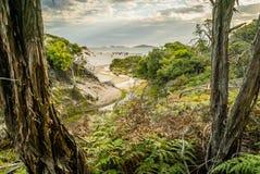 Piepend die strand van het bos in Wilsons wordt gezien prom stock fotografie