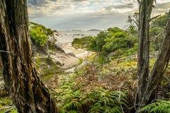 Piepend die strand van het bos in Wilsons wordt gezien prom royalty-vrije stock afbeeldingen