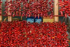 pieprzone czerwone Obraz Royalty Free