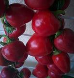 pieprzone czerwone Fotografia Royalty Free