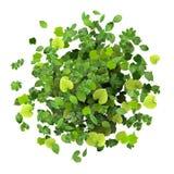 Pierścionek robić od zielonych liści Fotografia Royalty Free