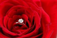 pierścionek zaręczynowy czerwone rose Zdjęcia Royalty Free