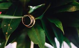 Pierścionków kwiatów miłość Zdjęcie Royalty Free