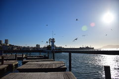 Pier 39 In San Francisco During A Sunny Cloudless Day With Seals And Seagulls Royalty Free Stock Photography