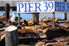 Pier 39, San Francisco Royalty Free Stock Image