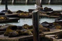 Pier 39, San Francisco Royalty Free Stock Image