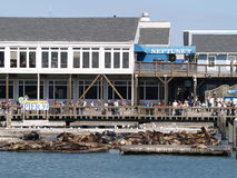 Pier 39 in San Francisco Bay Stockbild
