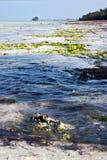 Pier africa coastline froth foam Stock Images