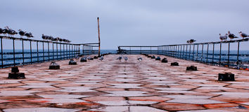Pier B. Restless seagulls waiting for departure royalty free stock photography