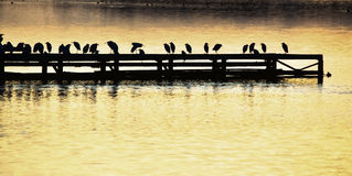 Lake viewing, sunset viewing, wharf viewing,pier viewing,bird silhouette picture. Pier at sunset crowded with birds on Lake patriain the province of Naples. lake Stock Photos
