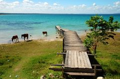 Pier on a Blue Lake. With Horses in Guatemala stock images