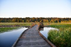 A pier at Burnaby lake illuminated by the sunrise.  BC Canada royalty free stock image