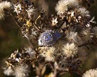 pierścionek Zdjęcie Stock
