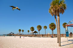 Pier 60 Clearwater Beach Florida Stock Photo