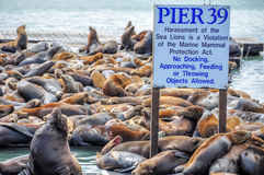 Pier 39 and Fisherman's Wharf Royalty Free Stock Photos